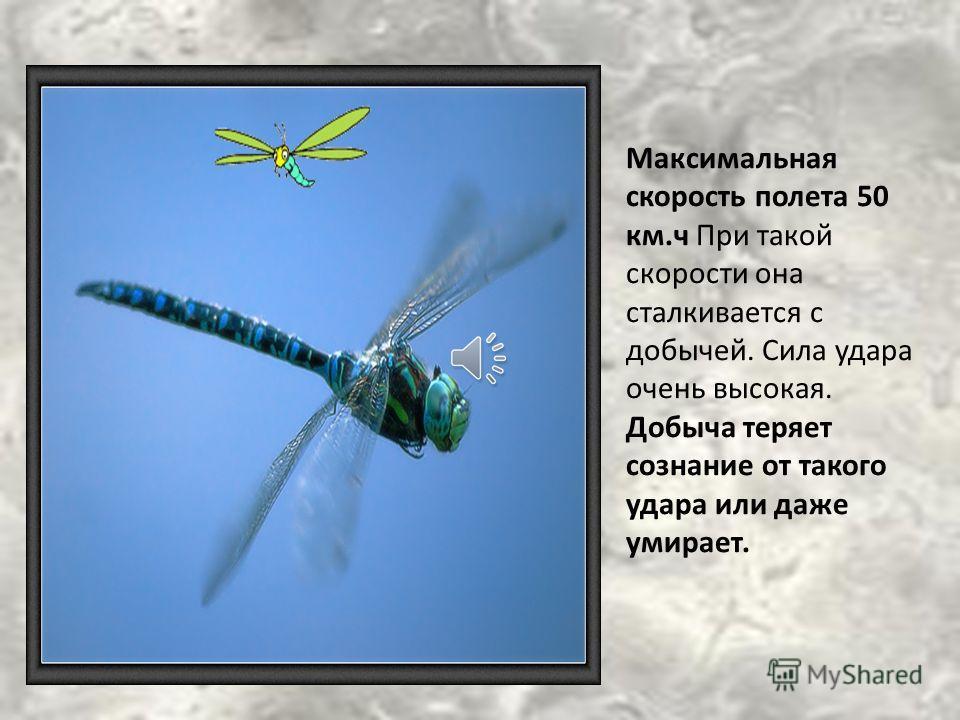 При полете стрекозы машут передней и задней парами крыльев поочередно, добиваясь лучшей маневренности и скорости.