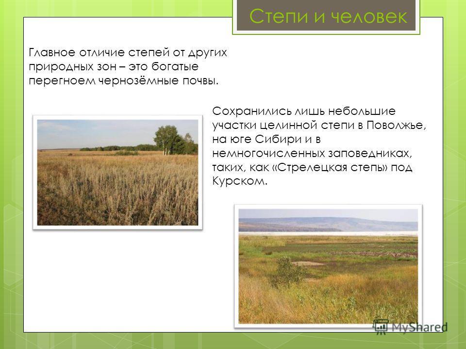 Степи и человек Главное отличие степей от других природных зон – это богатые перегноем чернозёмные почвы. Сохранились лишь небольшие участки целинной степи в Поволжье, на юге Сибири и в немногочисленных заповедниках, таких, как «Стрелецкая степь» под