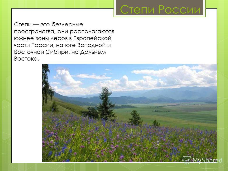 Степи России Степи это безлесные пространства, они располагаются южнее зоны лесов в Европейской части России, на юге Западной и Восточной Сибири, на Дальнем Востоке.