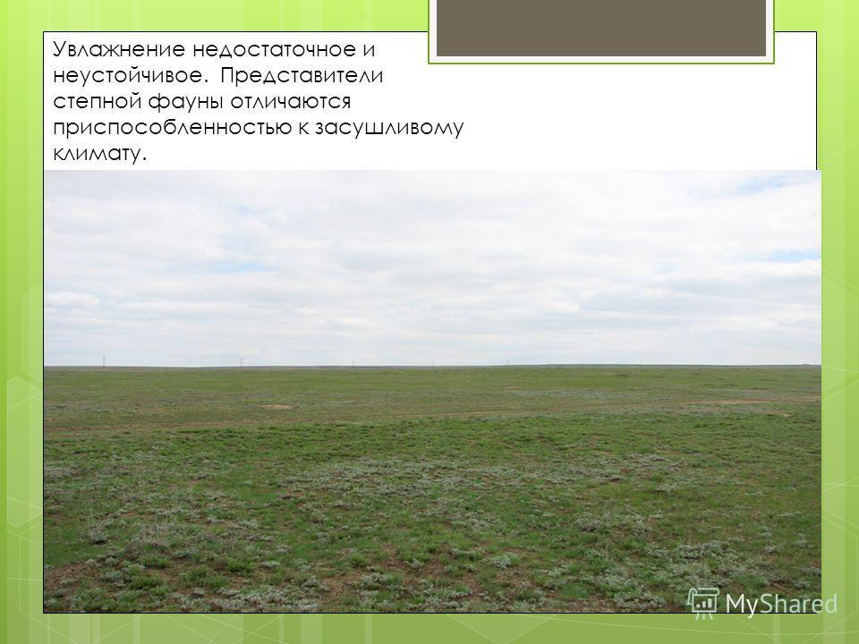 Увлажнение недостаточное и неустойчивое. Представители степной фауны отличаются приспособленностью к засушливому климату.