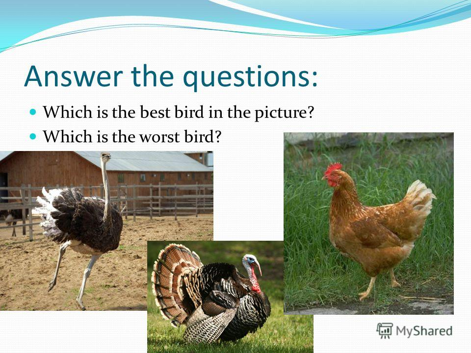 Answer the questions: Which is the best bird in the picture? Which is the worst bird?