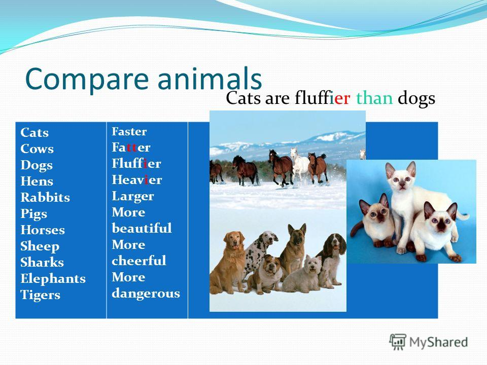 Compare animals Cats Cows Dogs Hens Rabbits Pigs Horses Sheep Sharks Elephants Tigers Faster Fatter Fluffier Heavier Larger More beautiful More cheerful More dangerous Cats are fluffier than dogs