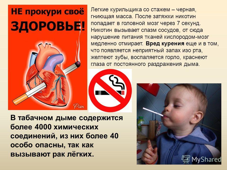 В табачном дыме содержится более 4000 химических соединений, из них более 40 особо опасны, так как вызывают рак лёгких. Легкие курильщика со стажем – черная, гниющая масса. После затяжки никотин попадает в головной мозг через 7 секунд. Никотин вызыва