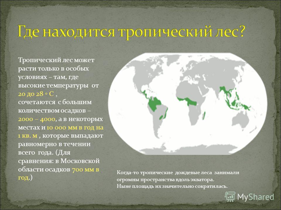 Тропический лес может расти только в особых условиях – там, где высокие температуры от 20 до 28 С, сочетаются с большим количеством осадков – 2000 – 4000, а в некоторых местах и 10 000 мм в год на 1 кв. м, которые выпадают равномерно в течении всего