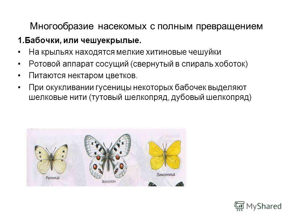 Многообразие насекомых с полным превращением 1.Бабочки, или чешуекрылые. На крыльях находятся мелкие хитиновые чешуйки Ротовой аппарат сосущий (свернутый в спираль хоботок) Питаются нектаром цветков. При окукливании гусеницы некоторых бабочек выделяю