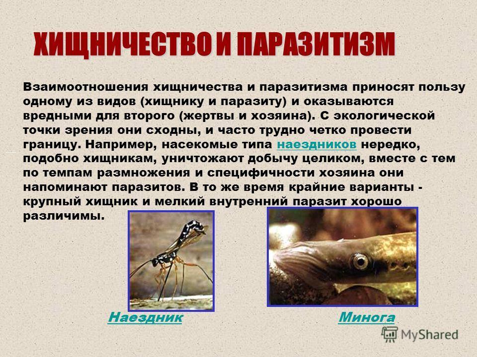 ХИЩНИЧЕСТВО И ПАРАЗИТИЗМ Взаимоотношения хищничества и паразитизма приносят пользу одному из видов (хищнику и паразиту) и оказываются вредными для второго (жертвы и хозяина). С экологической точки зрения они сходны, и часто трудно четко провести гран