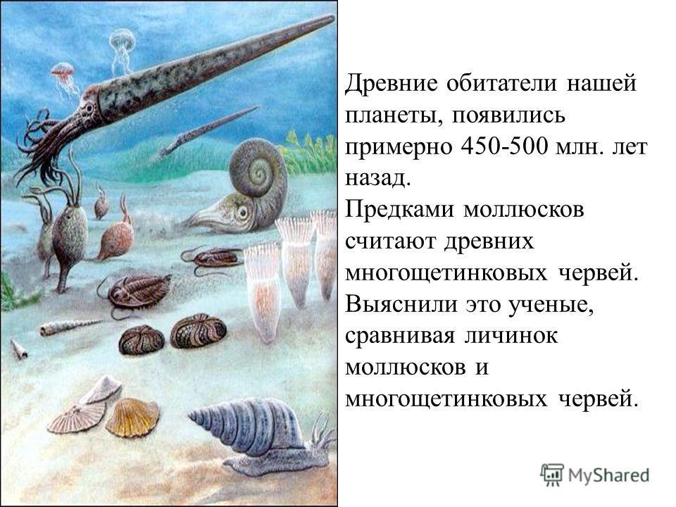 Древние обитатели нашей планеты, появились примерно 450-500 млн. лет назад. Предками моллюсков считают древних многощетинковых червей. Выяснили это ученые, сравнивая личинок моллюсков и многощетинковых червей.
