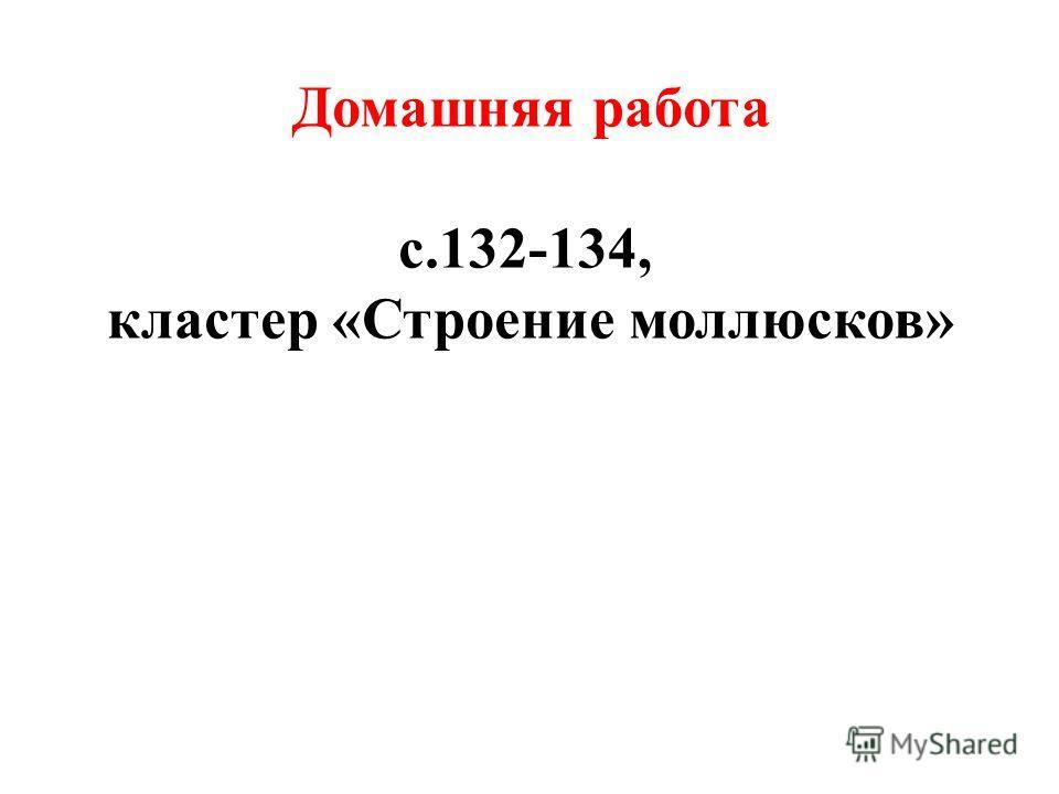 Домашняя работа с.132-134, кластер «Строение моллюсков»