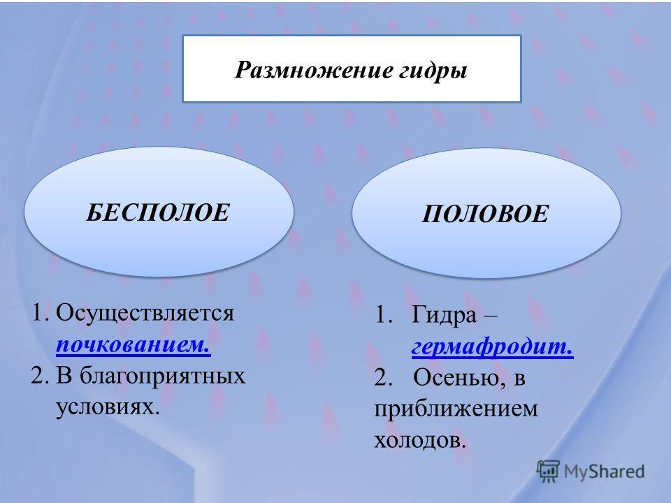Размножение гидры БЕСПОЛОЕ ПОЛОВОЕ 1. Осуществляется почкованием. почкованием. 2. В благоприятных условиях. 1. Гидра – гермафродит. гермафродит. 2. Осенью, в приближением холодов.