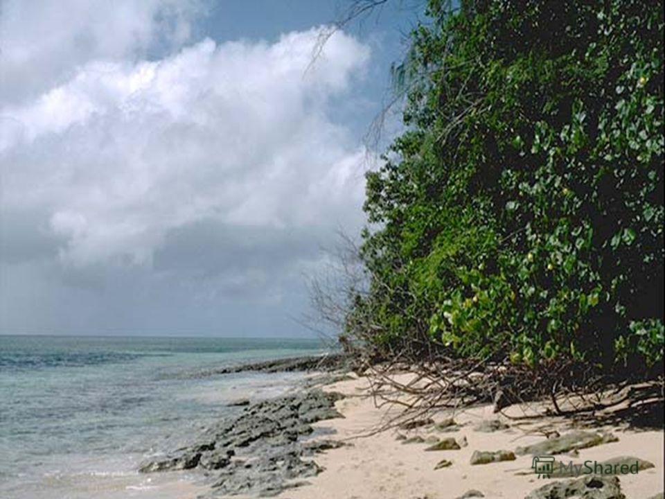 Большой по объему 710 млн км 3 большой по площади 49% мирового океана или 178,6 млн км 2 глубокий 11022 м ( Марианский желоб ) изобилующий островами густонаселенное побережье сильные ветры высокие и длинные ветровые волны 34 м разрушительные волны цу