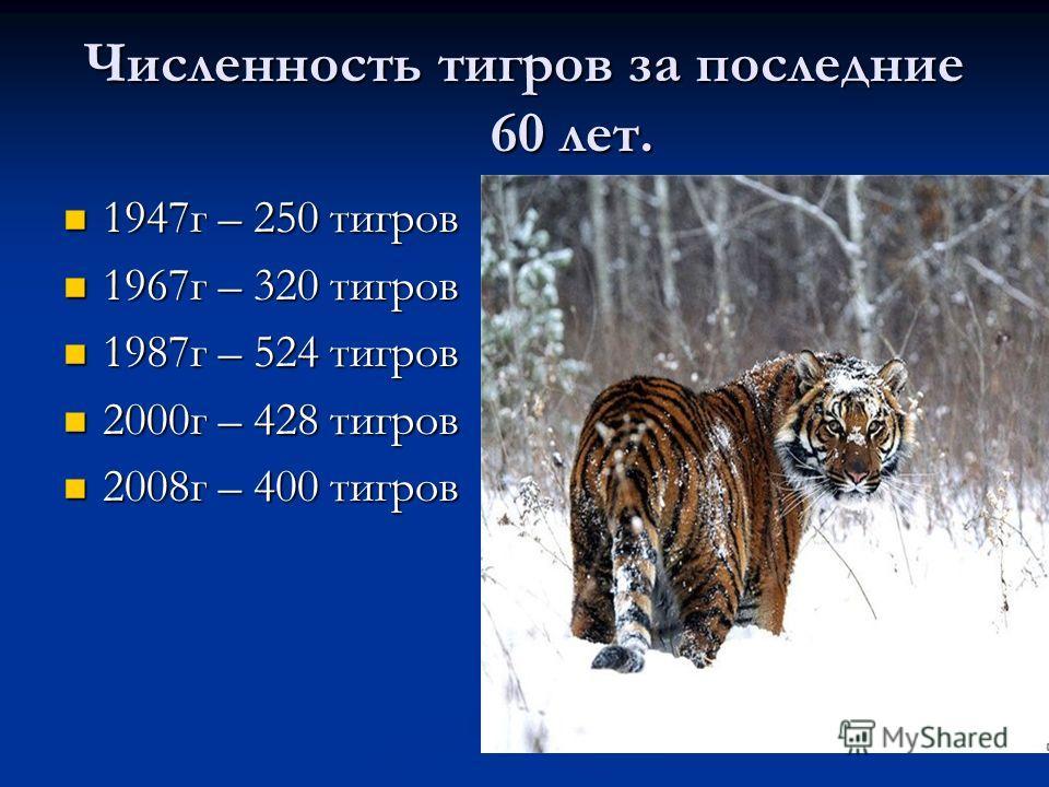 Численность тигров за последние 60 лет. 1947 г – 250 тигров 1947 г – 250 тигров 1967 г – 320 тигров 1967 г – 320 тигров 1987 г – 524 тигров 1987 г – 524 тигров 2000 г – 428 тигров 2000 г – 428 тигров 2008 г – 400 тигров 2008 г – 400 тигров