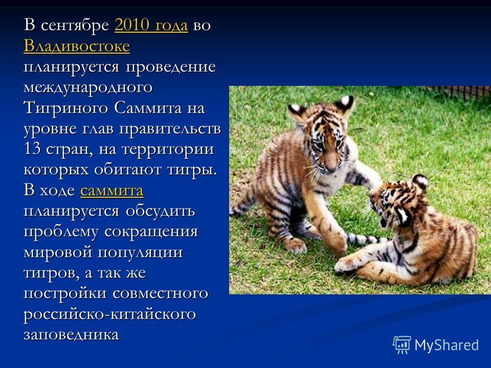 В сентябре 2010 года во Владивостоке планируется проведение международного Тигриного Саммита на уровне глав правительств 13 стран, на территории которых обитают тигры. В ходе саммита планируется обсудить проблему сокращения мировой популяции тигров,
