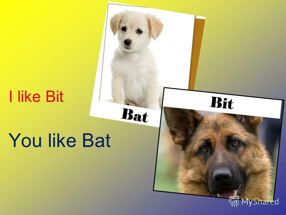 I like Bit You like Bat