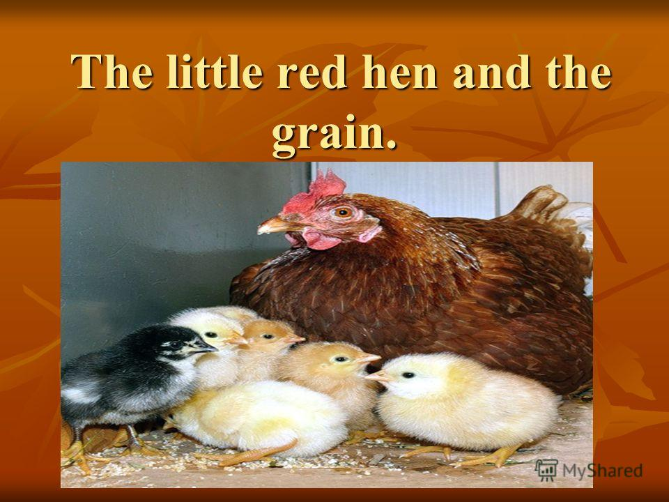 The little red hen and the grain. The little red hen and the grain.