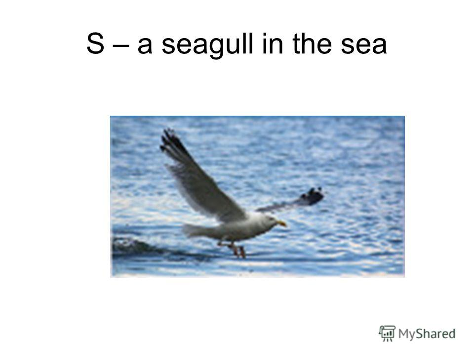 S – a seagull in the sea