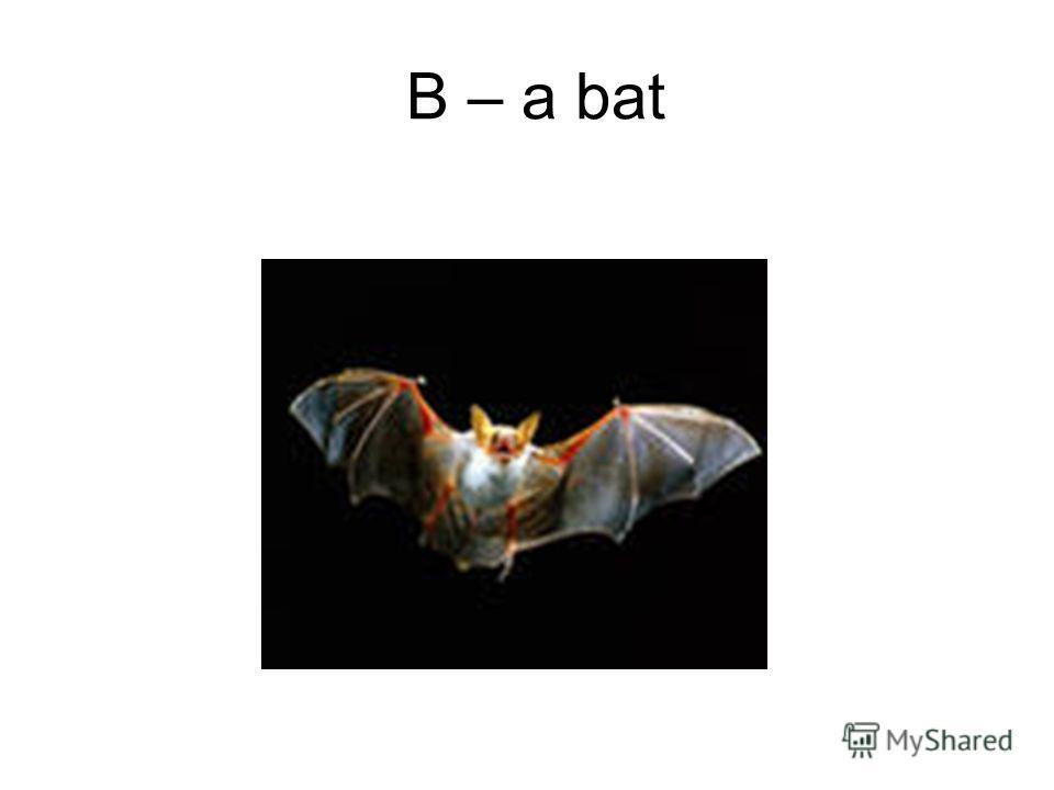 B – a bat