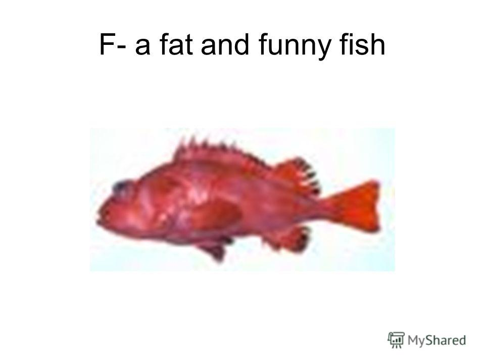 F- a fat and funny fish