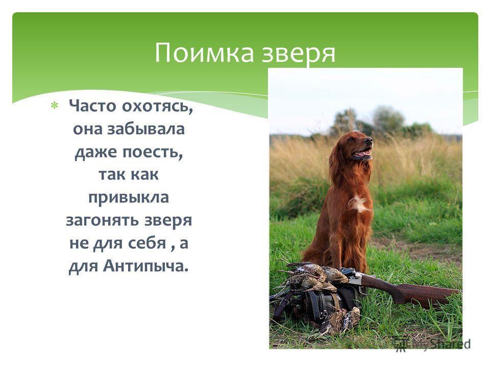 Поимка зверя Часто охотясь, она забывала даже поесть, так как привыкла загонять зверя не для себя, а для Антипыча.
