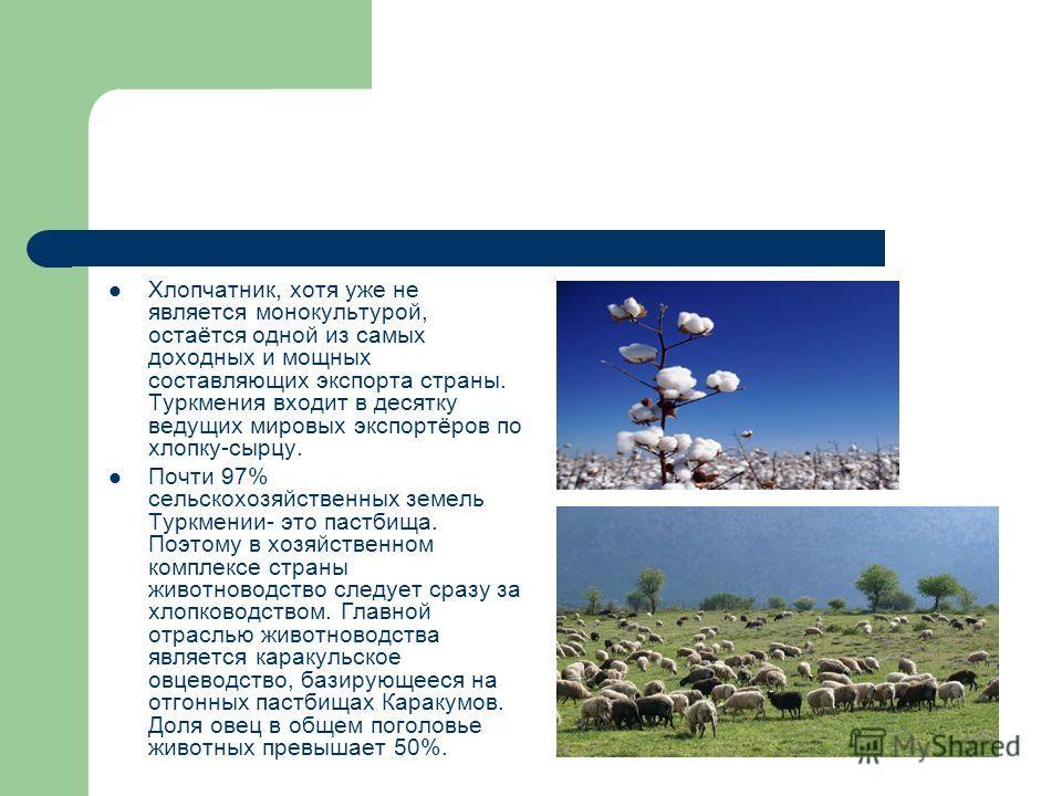 Хлопчатник, хотя уже не является монокультурой, остаётся одной из самых доходных и мощных составляющих экспорта страны. Туркмения входит в десятку ведущих мировых экспортёров по хлопку-сырцу. Почти 97% сельскохозяйственных земель Туркмении- это пастб