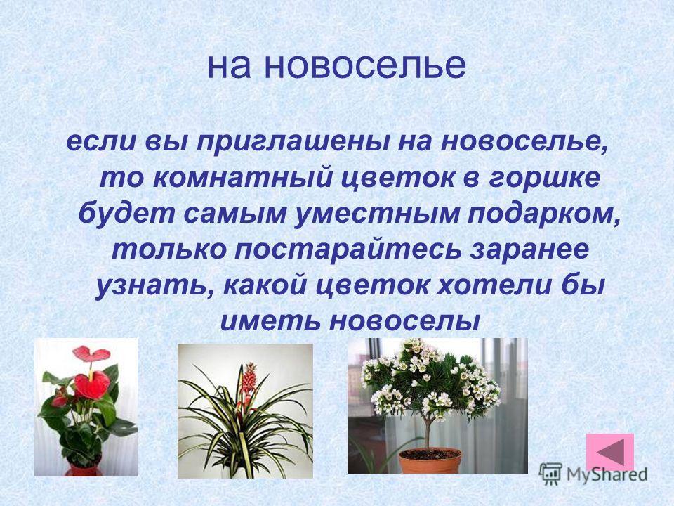 на новоселье если вы приглашены на новоселье, то комнатный цветок в горшке будет самым уместным подарком, только постарайтесь заранее узнать, какой цветок хотели бы иметь новоселы