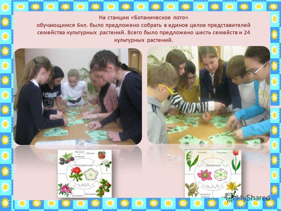 На станции «Ботаническое лото» обучающимся 6 кл. было предложено собрать в единое целое представителей семейства культурных растений. Всего было предложено шесть семейств и 24 культурных растений.