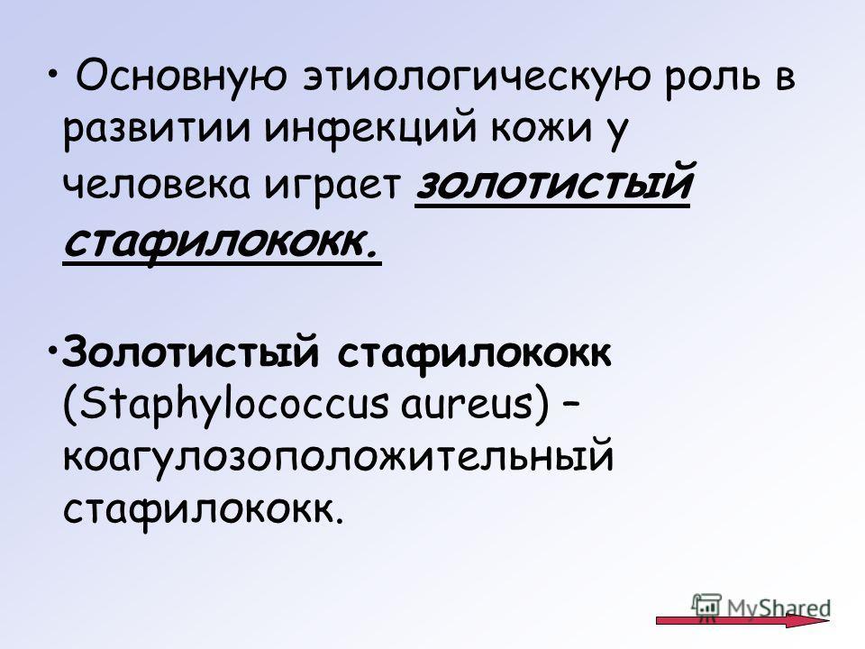 Основную этиологическую роль в развитии инфекций кожи у человека играет золотистый стафилококк. Золотистый стафилококк (Staphylococcus aureus) – коагулозоположительный стафилококк.
