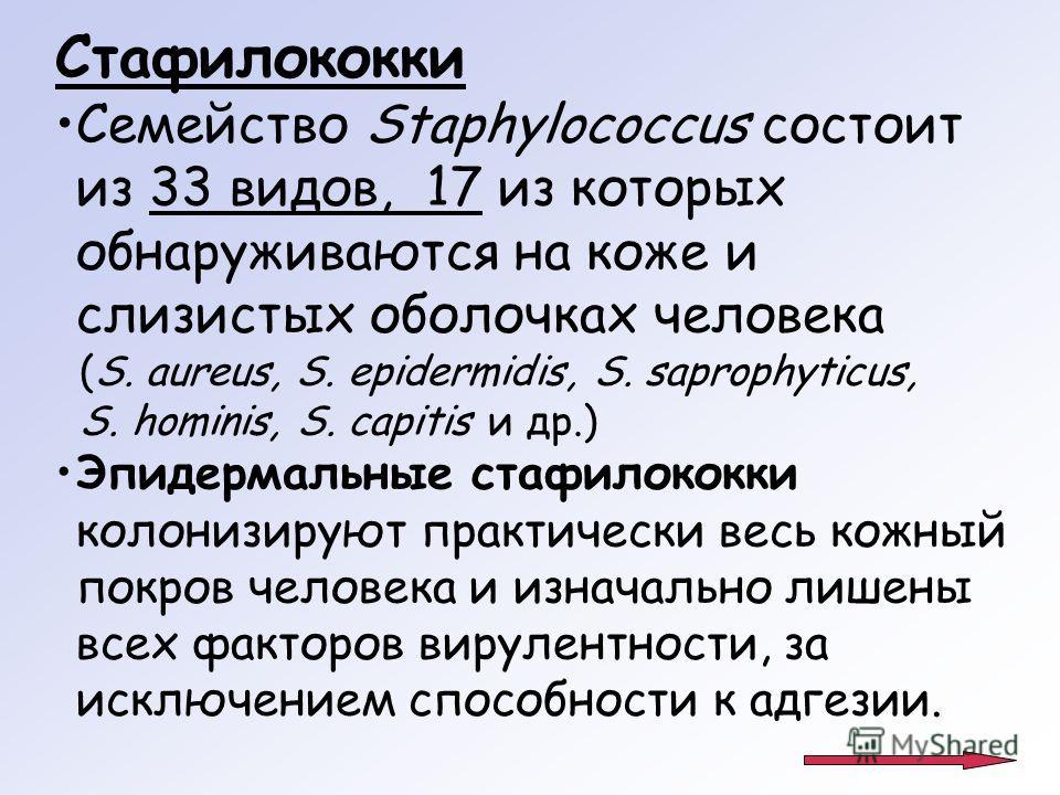 Стафилококки Семейство Staphylococcus состоит из 33 видов, 17 из которых обнаруживаются на коже и слизистых оболочках человека (S. aureus, S. epidermidis, S. saprophyticus, S. hominis, S. capitis и др.) Эпидермальные стафилококки колонизируют практич