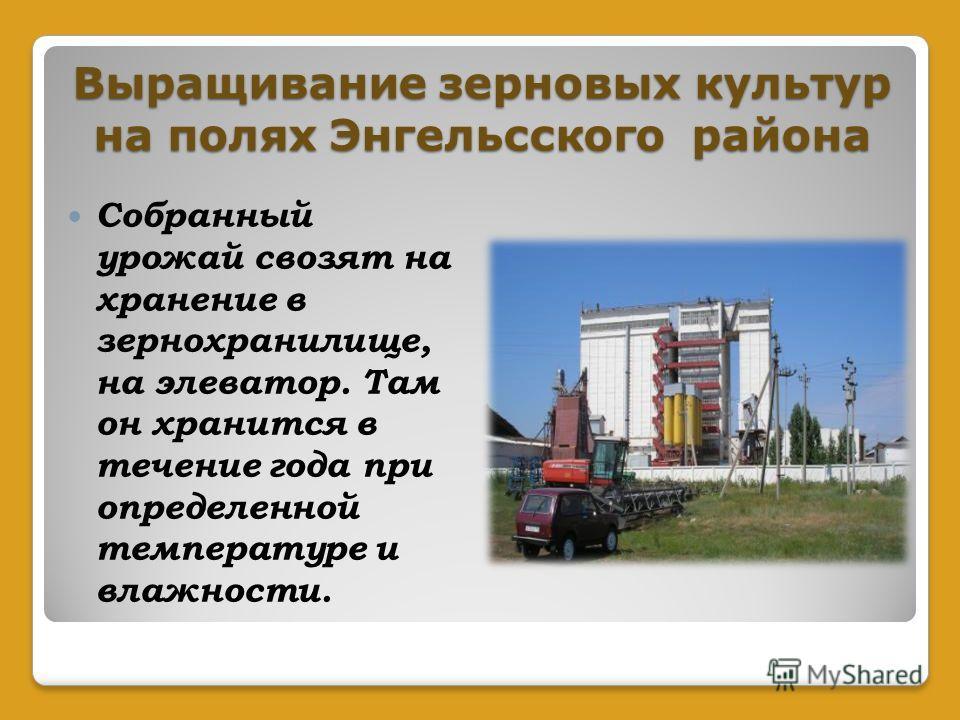Выращивание зерновых культур на полях Энгельсского района Собранный урожай свозят на хранение в зернохранилище, на элеватор. Там он хранится в течение года при определенной температуре и влажности.