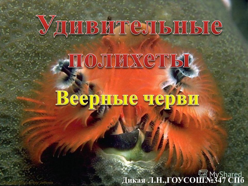 Дикая Л.Н.,ГОУСОШ347 СПб