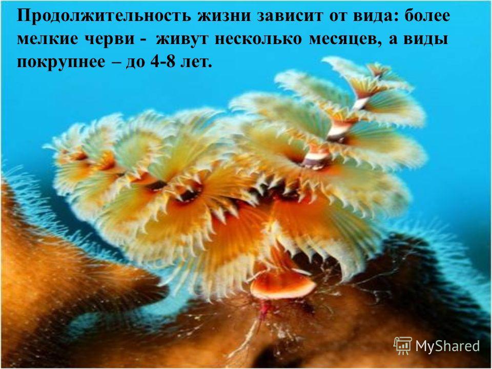 Продолжительность жизни зависит от вида: более мелкие черви - живут несколько месяцев, а виды покрупнее – до 4-8 лет.