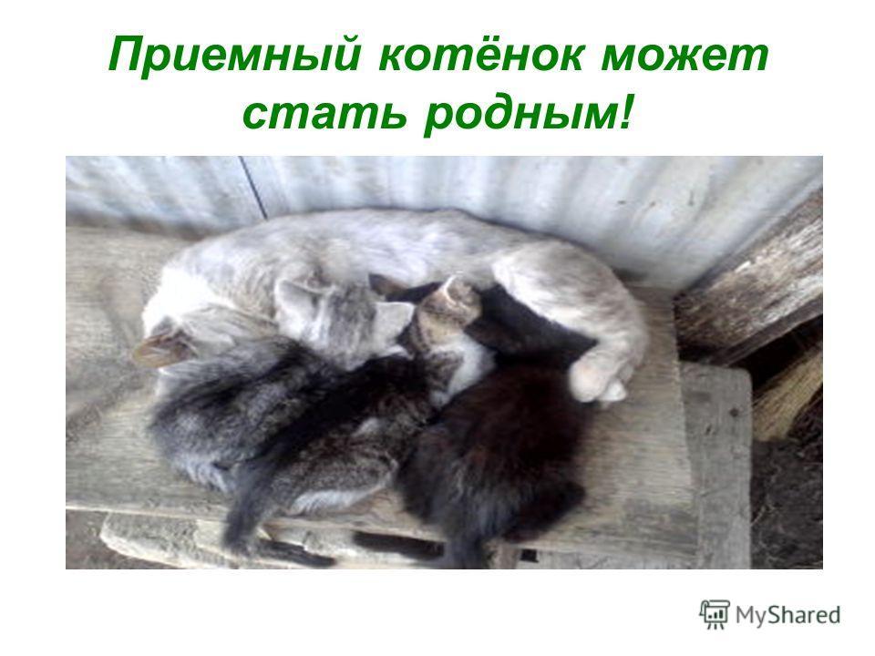 Приемный котёнок может стать родным!