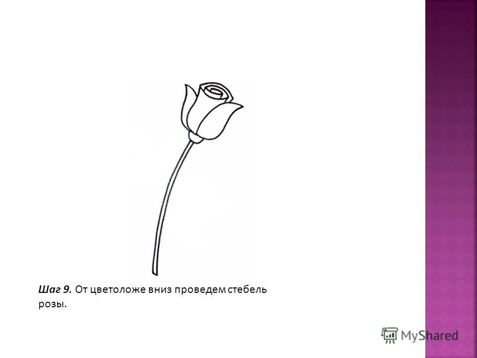 Шаг 9. От цветоложе вниз проведем стебель розы.