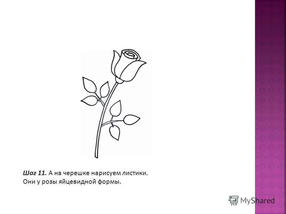 Шаг 11. А на черешке нарисуем листики. Они у розы яйцевидной формы.