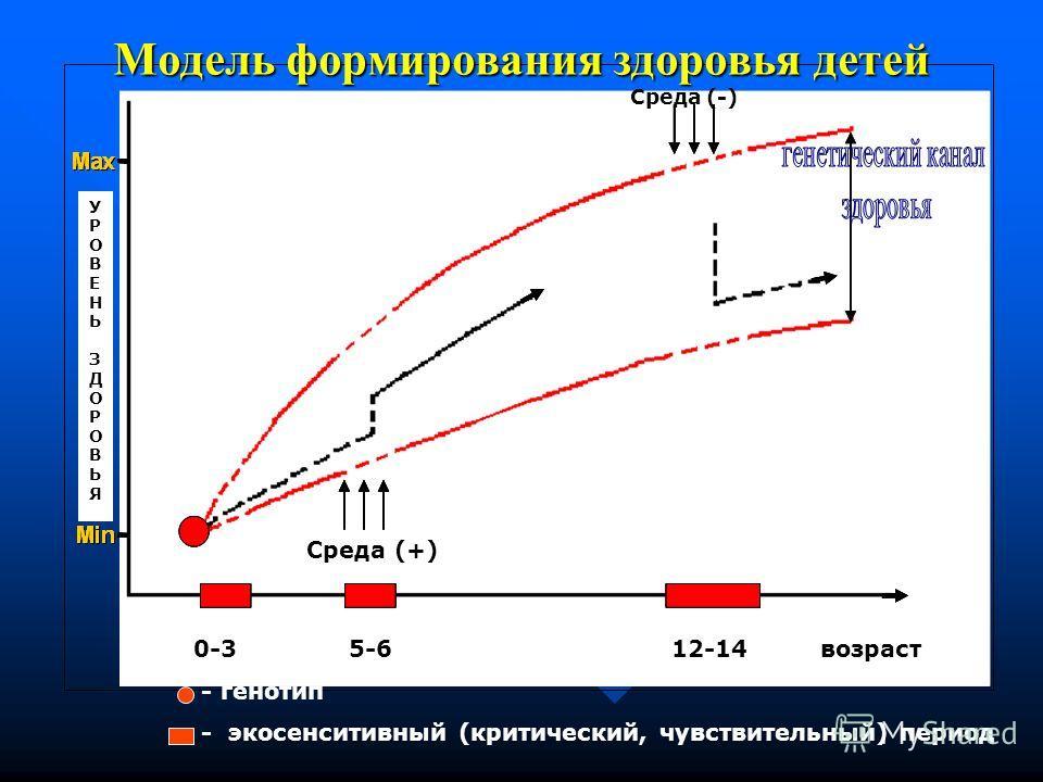 Модель формирования здоровья детей УРОВЕНЬЗДОРОВЬЯУРОВЕНЬЗДОРОВЬЯ Среда (-) Среда (+) 0-3 5-6 12-14 возраст - генотип - эко сенситивный (критический, чувствительный) период
