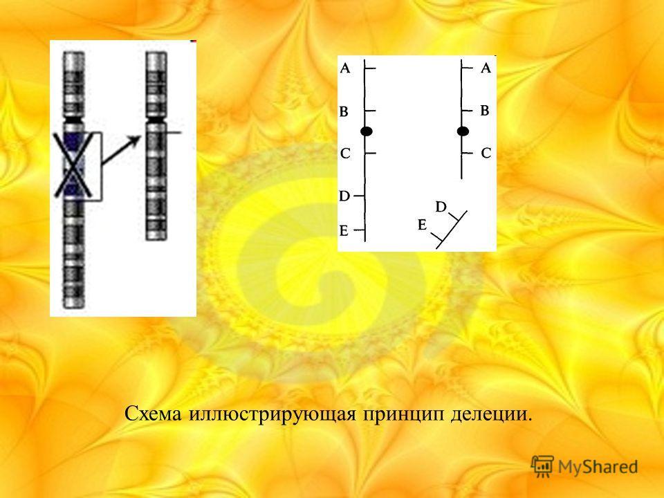 Схема иллюстрирующая принцип делеции.