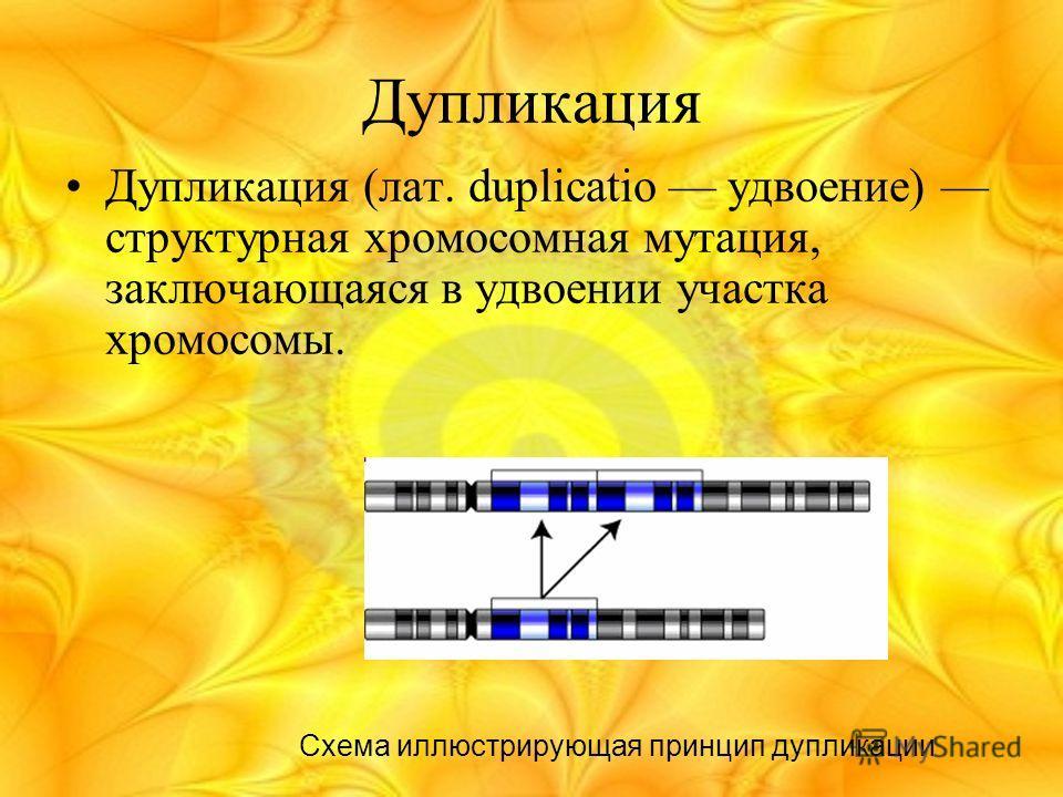 Дупликация Дупликация (лат. duplicatio удвоение) структурная хромосомная мутация, заключающаяся в удвоении участка хромосомы. Схема иллюстрирующая принцип дупликации
