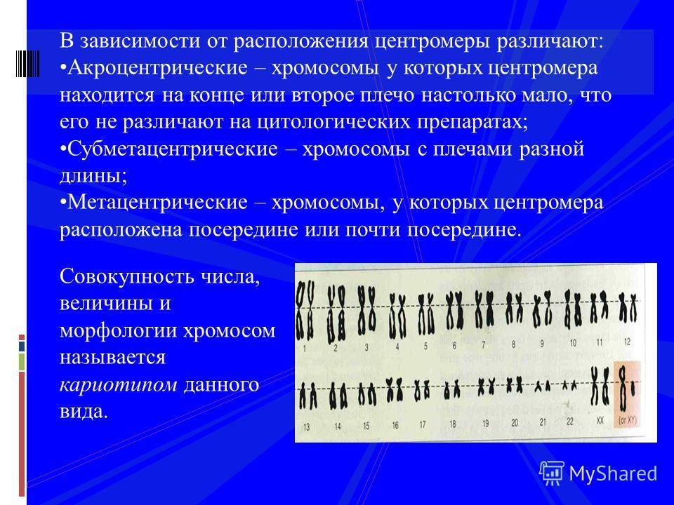 В зависимости от расположения центромеры различают: Акроцентрические – хромосомы у которых центромера находится на конце или второе плечо настолько мало, что его не различают на цитологических препаратах; Субметацентрические – хромосомы с плечами раз