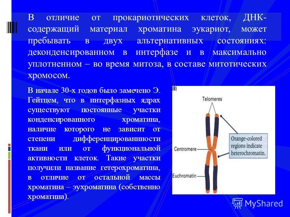 В отличие от прокариотических клеток, ДНК- содержащий материал хроматина эукариот, может пребывать в двух альтернативных состояниях: де конденсированном в интерфазе и в максимально уплотненном – во время митоза, в составе митотических хромосом. В нач