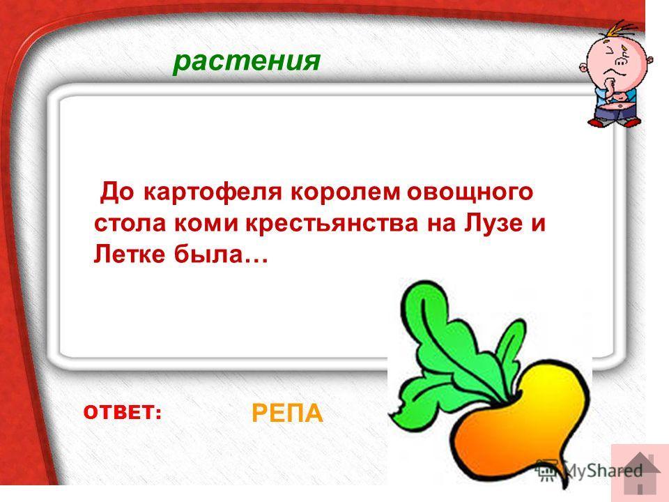 растения ОТВЕТ: РЕПА До картофеля королем овощного стола коми крестьянства на Лузе и Летке была…