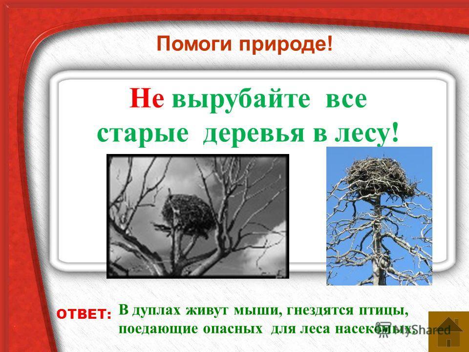 Помоги природе! Не вырубайте все старые деревья в лесу! ОТВЕТ: В дуплах живут мыши, гнездятся птицы, поедающие опасных для леса насекомых.