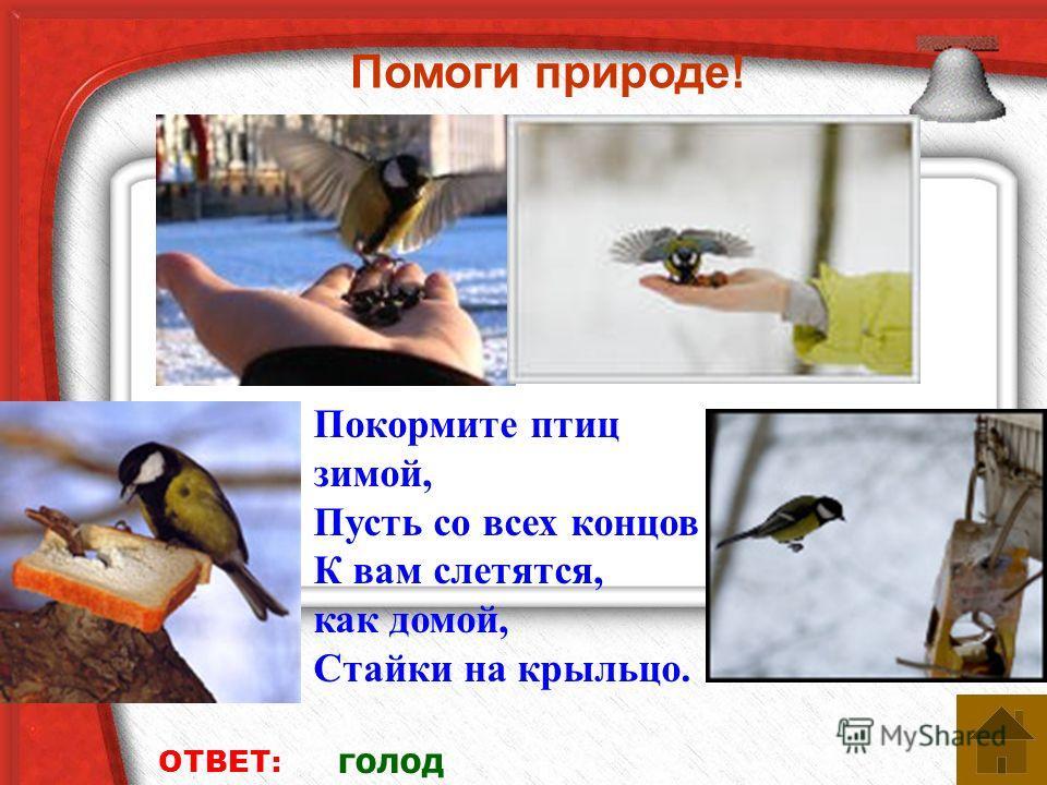 Помоги природе! Что птицам страшнее холод или голод зимы? ОТВЕТ: голод Покормите птиц зимой, Пусть со всех концов К вам слетятся, как домой, Стайки на крыльцо.