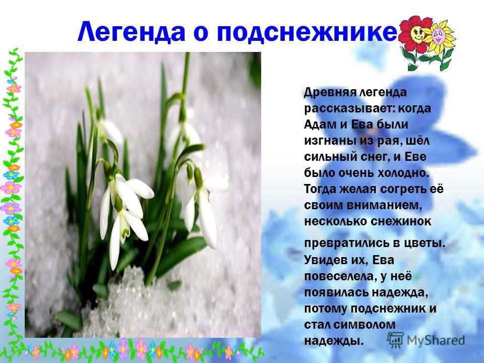 Легенда о подснежнике. Древняя легенда рассказывает: когда Адам и Ева были изгнаны из рая, шёл сильный снег, и Еве было очень холодно. Тогда желая согреть её своим вниманием, несколько снежинок превратились в цветы. Увидев их, Ева повеселела, у неё п