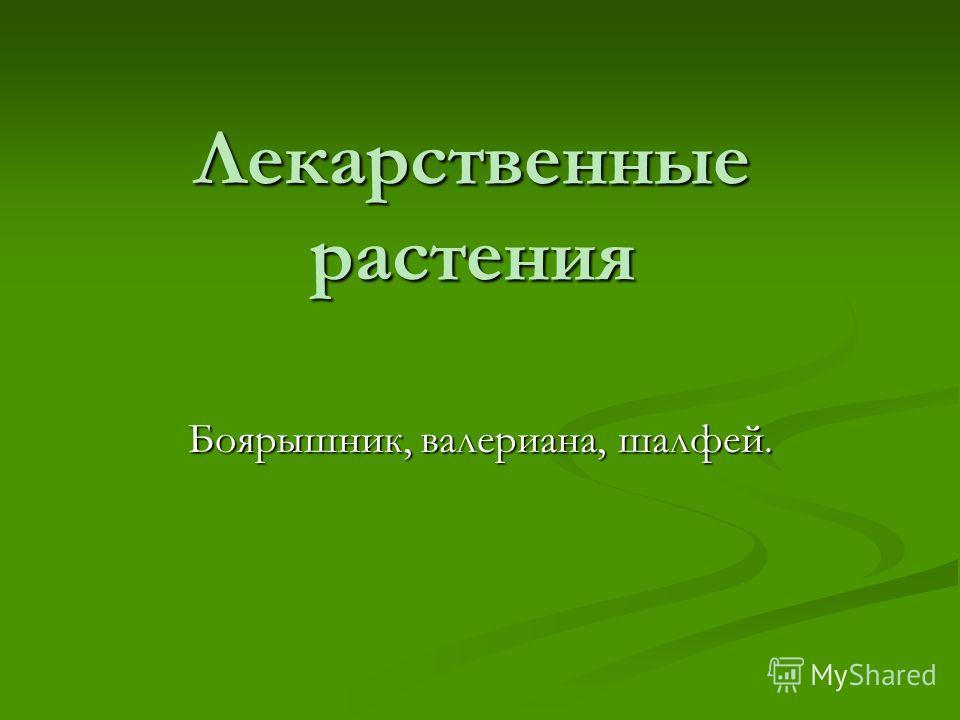 Лекарственные растения Боярышник, валериана, шалфей.