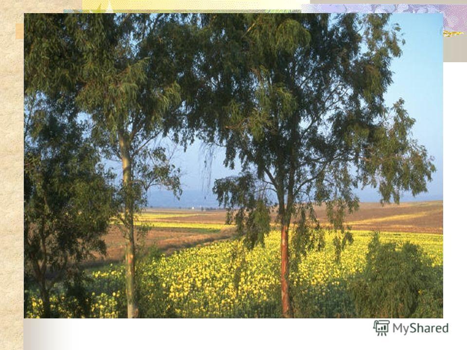 Лес, точно терем расписной: Лиловый,золотой, багряный, Стоит над солнечной поляной, Завороженный тишиной. И. Бунин