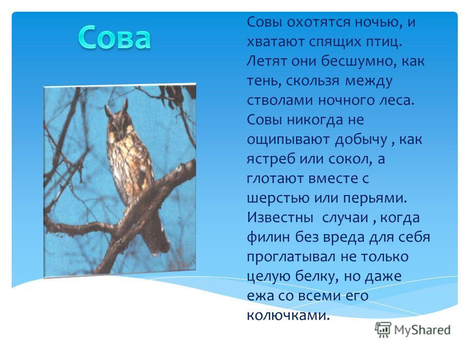 Совы охотятся ночью, и хватают спящих птиц. Летят они бесшумно, как тень, скользя между стволами ночного леса. Совы никогда не ощипывают добычу, как ястреб или сокол, а глотают вместе с шерстью или перьями. Известны случаи, когда филин без вреда для