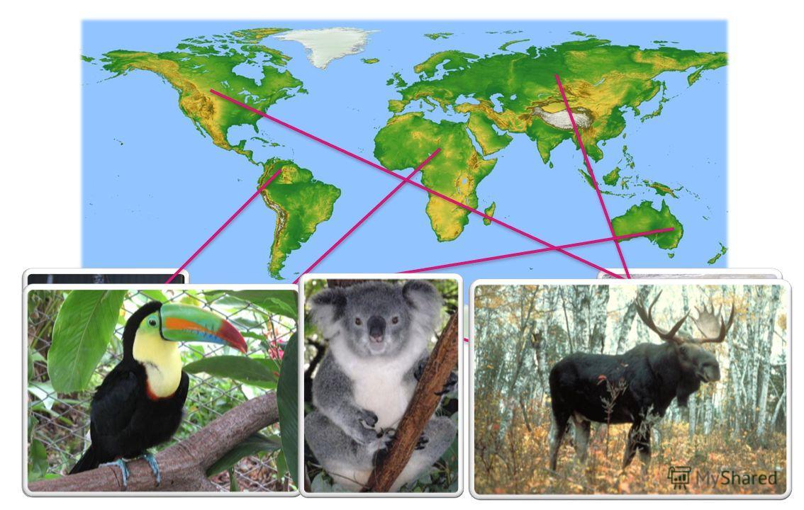 Местообитания животных Расставьте животных на карте, таким образом, чтобы они соответствовали своему местообитанию. Начать