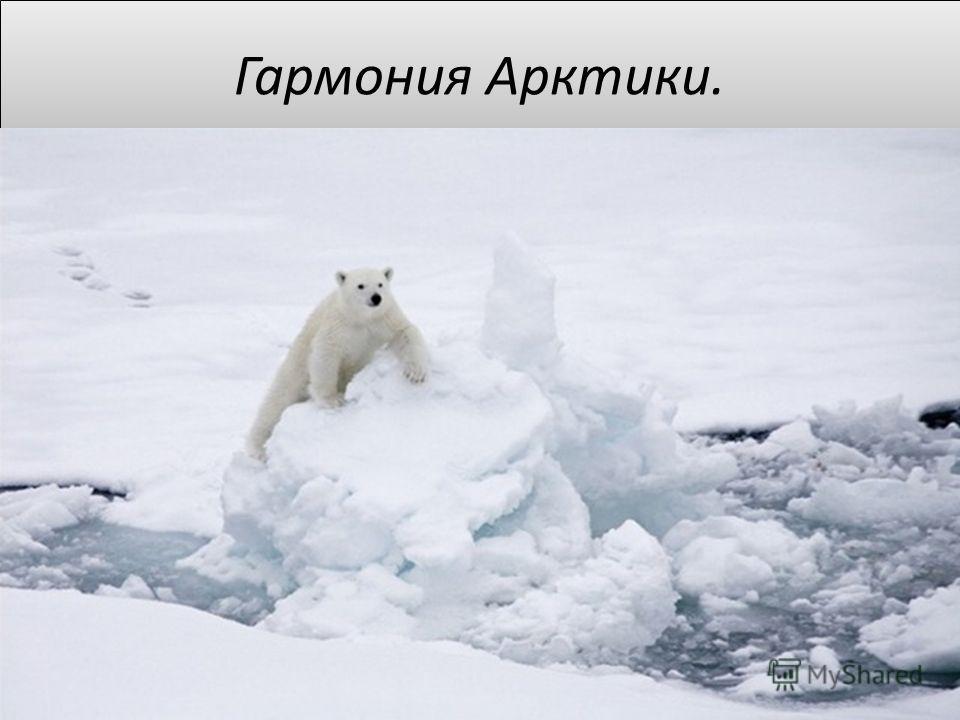 Гармония Арктики.