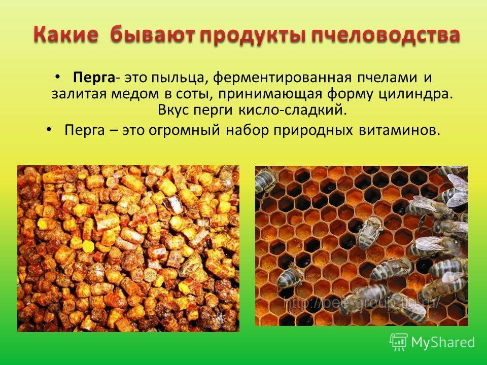 Перга- это пыльца, ферментированная пчелами и залитая медом в соты, принимающая форму цилиндра. Вкус перги кисло-сладкий. Перга – это огромный набор природных витаминов.
