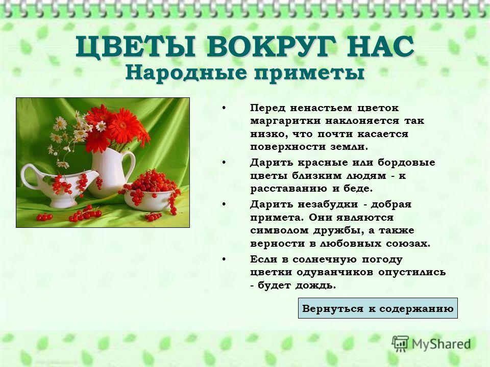 ЦВЕТЫ ВОКРУГ НАС Народные приметы Перед ненастьем цветок маргаритки наклоняется так низко, что почти касается поверхности земли. Дарить красные или бордовые цветы близким людям - к расставанию и беде. Дарить незабудки - добрая примета. Они являются с