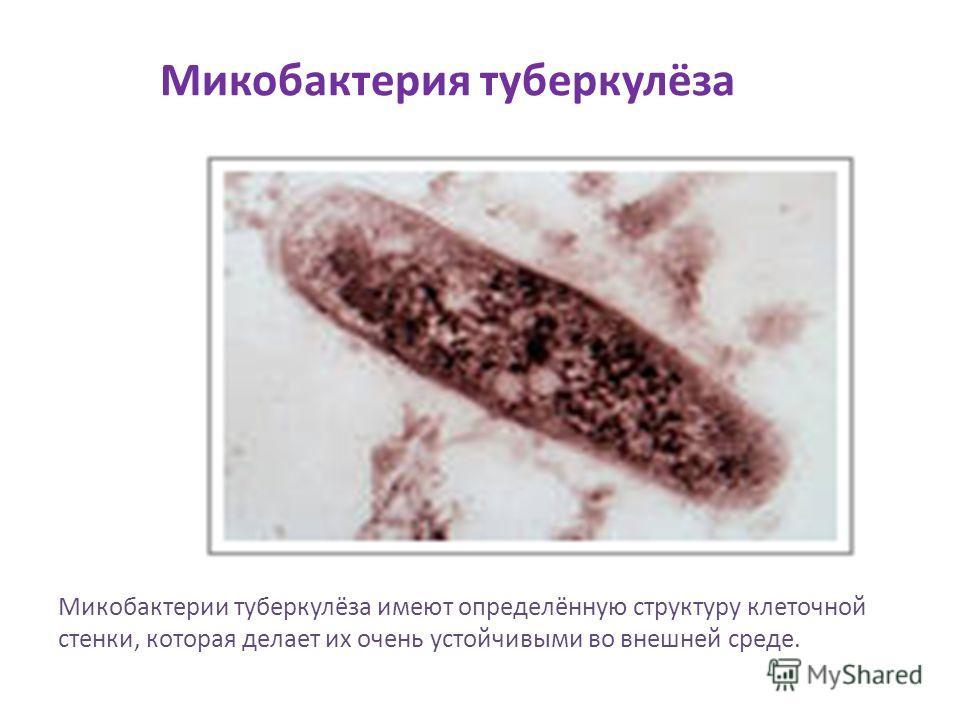 Микобактерия туберкулёза Микобактерии туберкулёза имеют определённую структуру клеточной стенки, которая делает их очень устойчивыми во внешней среде.